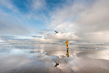 Girl In Yellow Coat Flying Kite At Beach With Reflection