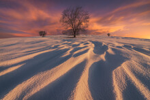 Winter Landscape With Leafless Trees In Bright Sunlight At Sunset