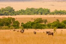 Paysage De Plaine Et Arbres Afrique Kenya