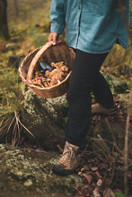 Woman With Basket Full Of Different Mushrooms