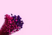 Ramo De Flores Secas De Color Rosa Y Morado Sobre Un Fondo Rosa Liso Y Aislado. Vista Superior. Copy Space