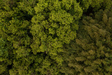 Treetops Seen From Above - Drone View