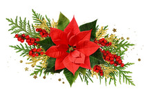 Red Christmas Poinsettia Flower Red Berries And Thuya Twigs In A Christmas Arrangement Isolated On White