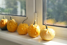 Set Of Many Different Small Mini Warty Yellow Decorative Pumpkins On White Windowsill At Home Interior. Halloween House Seasonal Traditional Decoration. Natiral Plant Decor