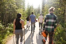 Conservation Volunteers Walking Through Forest