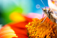 Butterfly Feeding On A Sunflower