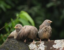 Group Of Happy Robins Sitting On The Top A Roof