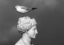 Mouette Sur La Statue «Allégorie De La Comédie» Au Jardin Des Tuileries