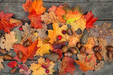 Autumn Bright Leaves, Acorns, Cones On Wooden Board. Autumn Natural Background. Symbol Of Fall Season, Thanksgiving Holiday. Flat Lay