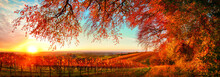 Dreamy Autumn Sunset Landscape Panorama, A Gorgeous Rural Scene With Road Of Grapevine On A Hill With The Branches Of Red Trees Hanging Above Them