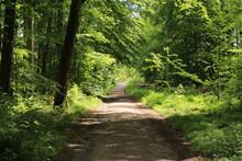 Blick Auf Einen Waldweg In Der Waldemei, Einem Waldstück In Menden Im Sauerland