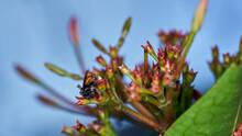 Plebeia Bee On Garden - 6