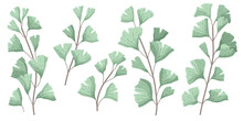 Ginkgo Biloba Known As The Ginko Or Gingko Leaves And Seeds On Branches Isolated Illustration. Ginkgo Plant Herbal Alternative Medical Care Anti-oxidant Leaves In Watercolor Style.