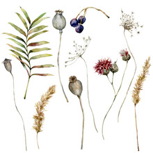 Watercolor Autumn Set Of Dry Pampas Grass, Poppy, Anise, Thistle, Berry And Leaves. Hand Painted Fall Plants Isolated On White Background. Floral Illustration For Design, Print, Fabric Or Background.