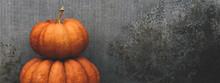 Large Orange Pumpkins Near The Concrete Gray Background.