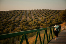 Girl Watching The Sunset In A Sea Of olive Trees In The Province Of Jaen