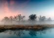 Poranne mgły w parku