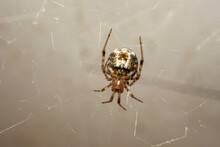 Spider Waiting For Its Prey