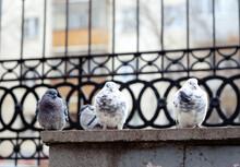 Bird, Pigeon, Dove, Animal, Nature, Birds, Feather, Beak, Peace, Wildlife, Wing, Wild, Feathers, Freedom, Eurasian Collared Dove, Sky, Fly, Love, Streptopelia Decaocto, Collared, Wedding, Pet, Collare
