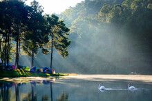 Morning View With Duo Swans, Reflection And Beam At The Royal Initiative Project Pang Tong (Pang Ung), Mae Hong Son, Thailand