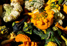A Pile Of Colorful Gourds