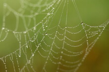 Late Summer. Morning Dew On A Spider Web