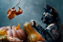 Cute Little Cat Playing With A Dry Autumn Leaf. A Cat And Two Large Ripe Pumpkins Of Different Shapes And Colors On A Blue Background.