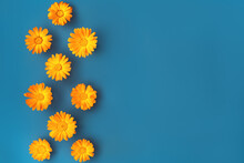 Beautiful Background With Orange Marigold Flowers Pattern On Blue Backdrop. Colorful Abstract Background. Backdrop For Your Design. Flat Lay Style. Copy Space.