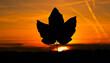 Liść na tle zachodu słońca