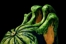 Close-up View Of Odd Shapes And Colors Of Underside Of A Gourd.