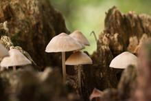 L'autunno è Il Momento Migliore Per La Caccia Ai Funghi, Ma Anche Se Non Si è Ricercatori, è Un Ottimo Periodo Per Farne Una Bella Scorpacciata. ... Dopo La Stagione Produttiva, I Fogliami Cadono.
