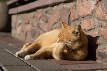 Red Cat On The Street Basking In The Sun
