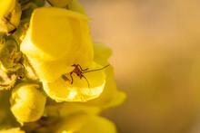Eine Kleiner Käfer Schaut Aus Einer Schön Blumer Heraus!