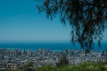 City And Ocean View Of Honolulu Oahu Hawaii. Tantalus Lookout - Puu Ualakaa State Park. Casuarina Equisetifolia, The Australian Pine Tree Or Whistling Pine Tree