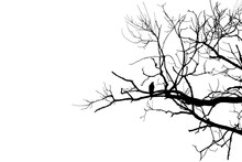Black Bird Crow Silhouette On Bare Branch On White Cut Out Isolated Background. Copy Space