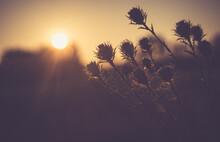 Sundown, Drzew, Niebo, Słońce, Krajobraz, Sylwetka, Drzew, Charakter, Wschody, Dzisiejszy Wieczór, Wieczorny, Chmura, Dłon, Bory, Chmura, Noc, Lato, Horyzont, Pomarańcz, Mgła, Mgiełka, Poranek, Roślin