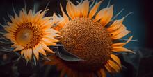Sunflower Flowers Close-up. Spring Garden Background
