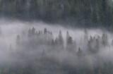 Fototapeta Fototapety do łazienki - Mglisty poranek w lesie