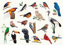 Various Cartoon Birds Collection For Any Visual Design.