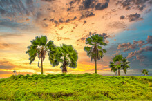 Beautiful Landscape With Palm Trees Under A Cloudy Sky