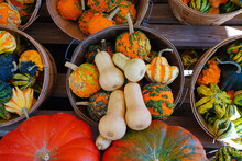 White, Green And Orange Gourds And Pumpkins In The Fall