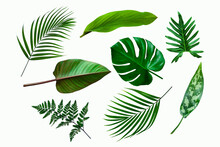 Set Of Green Tropical Plant Leaf Isolated On White Background For Design Elements, Flat Lay