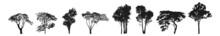 Trees Silhouettes. Tree Silhouettes - Red Maple ,sugar Maple, Oak, Poplar, Green Oak, Birch. Trees Icons Set.
