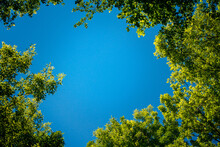 A Piece Of Blue Sky Between Green Leaves Of Tree Branches