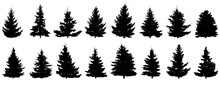 Spruce Trees Silhouette, Set Of Realistic Trees. Vector Illustration