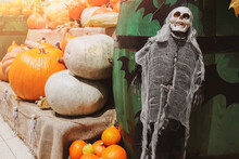 Halloween Decorations. Skeleton And Fresh Pumpkins. Farmers Market. Ripe Vegetables On Shelves For Sale In Countryside.