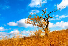 One Lonely Tree Top Hill. Old Half Bare Tree On The Wind Against Blue Sky. Fluffy Clouds On Background