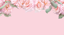 Floral Banner, Header With Copy Space. Pink Roses Isolated On Dark Grey Background. Natural Flowers Wallpaper Or Greeting Card.