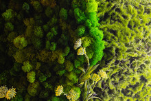 Round Picture Of Green Decorative Moss With LED Lighting On The Wall.