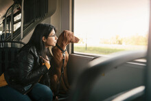 Young Woman And Dog Looking Through Window While Sitting In Cable Car